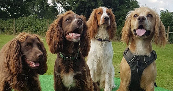 dog day care in Sevenoaks, Happy Tails Doggy Daycare