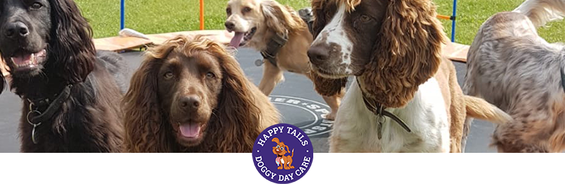 dog walker and dog grooming in Sevenoaks, Kent