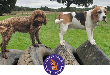 dog day care and dog boarding in Sevenoaks and surrounding areas, Orpington, Tonbridge