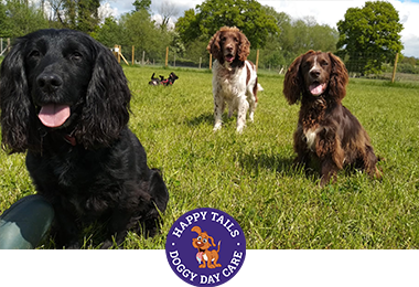 dog walker and dog sitter in Orpington, Sevenoaks, Tonbridge, Happy Tails Doggy Daycare